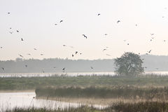 Moring landscape with lots of birds Stock Photo