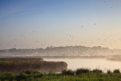 Moring landscape with lots of birds Royalty Free Stock Photography
