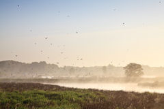 Moring landscape with lots of birds Stock Image