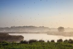 Moring landscape with lots of birds Royalty Free Stock Photo