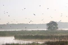 Moring Landschaft mit Lots Vögeln Stockfoto