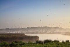 Moring Landschaft mit Lots Vögeln Lizenzfreie Stockfotografie