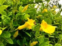 Moring piacevole di verde giallo della natura Immagine Stock