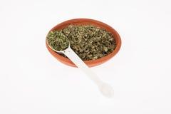 Moringa ξηρό ιατρικό φυτό φύλλων Στοκ Φωτογραφία