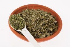 Moringa ξηρό ιατρικό φυτό φύλλων Στοκ Φωτογραφίες
