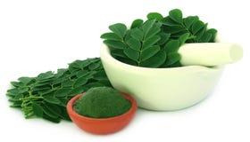 Moringa φύλλα Στοκ εικόνα με δικαίωμα ελεύθερης χρήσης