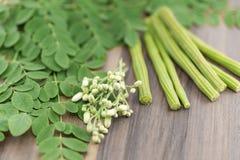 Moringa blad, bloem Royalty-vrije Stock Afbeelding