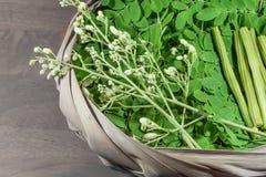 Moringa blad, bloem Royalty-vrije Stock Fotografie