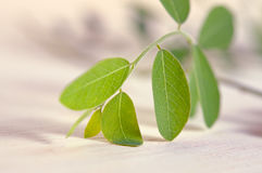 Moringa bladeren op houten raadsachtergrond Stock Foto