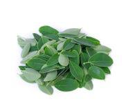 Moringa bladeren op wit worden geïsoleerd dat royalty-vrije stock foto's