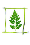 Moringa and drumstick frame Royalty Free Stock Photos
