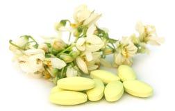 Moringa flower with pills Royalty Free Stock Photo