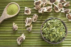 Moringa, leaves and seeds, herbs have medicinal properties stock images