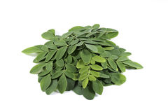 Free Moringa Leaf Royalty Free Stock Photos - 74071968