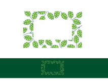 Moringa Leaf Frame Royalty Free Stock Photography