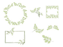 Moringa Leaf and Frame Design Set Royalty Free Stock Images