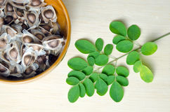 Moringa leaf and seed on wooden board background Stock Image