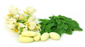 Moringa leaves and flower with pills Royalty Free Stock Photo