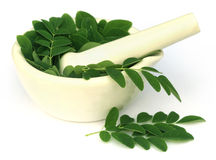 Moringa leaves with mortar and pestle Royalty Free Stock Photography