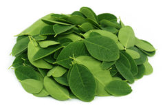 Moringa leaves Royalty Free Stock Photo