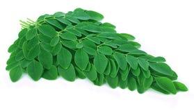 Moringa leaves Royalty Free Stock Image