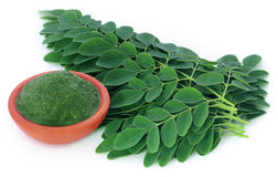 Moringa leaves Stock Image