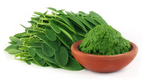 Moringa leaves with paste. On a brown bowl Royalty Free Stock Photography