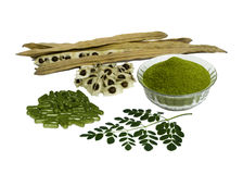 Moringa leaves, seeds, seedcases and capsules Royalty Free Stock Images