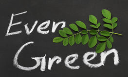 Moringa leaves with written Ever Green Royalty Free Stock Photo