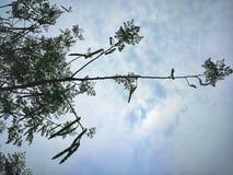 Moringa-Niederlassung gegen Himmel Stockfotos
