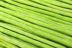 Moringa Oleifera Stock Images