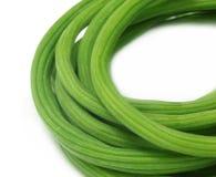 Moringa.oleifera lizenzfreie stockfotografie