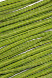 Moringa oleifera achtergrond Royalty-vrije Stock Foto