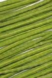 Moringa oleifera bakgrund Royaltyfri Foto