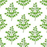 Moringa oleifera en couleurs, 1 sans couture Photographie stock libre de droits