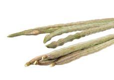 Moringa oleifera Lam or Bitter cucumber-chinese Royalty Free Stock Photography
