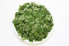 Moringa Oleifera leaves in a plate