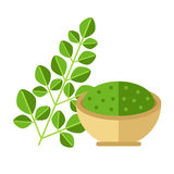 Moringa plant with leaves and seed powder. Vector illustration. Stock Photos