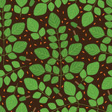 Moringa plant seamless pattern Royalty Free Stock Photo