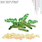 Moringa Pods with Vitamin A, B6, B2 and C Stock Photography