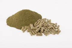 Moringa poeder in capsules Royalty-vrije Stock Foto's