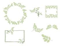 Moringa ramy i liścia projekta set ilustracji