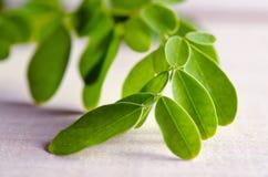 Moringa sidor på träbrädebakgrund Royaltyfri Fotografi