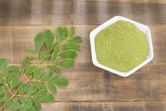 Moringa nutritional plant - Moringa oleifera. Moringa the species with the most nutritional value stock photo