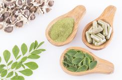 Moringa nutritional plant - Moringa oleifera. Moringa the species with the most nutritional value stock photos