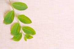 Moringa spreidt de natuurlijke groene bladinstallatie over houten raad uit backg Royalty-vrije Stock Fotografie