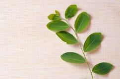 Moringa spreidt de natuurlijke groene bladinstallatie over houten raad uit backg Stock Afbeeldingen
