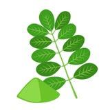 Moringa, superfood do vegetariano Nutrição saudável Erva, vegetal, pó, árvore no vaso de flores ilustração do vetor