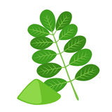 Moringa, vegetarian superfood. Healthy nutrition. Herb, vegetable, powder, tree in flowerpot. vector illustration