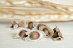 Moringa zaden op houten raadsachtergrond Stock Foto's